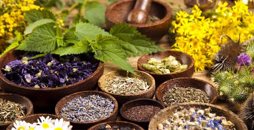 Medicinal Herbs , tip for cats and dogs